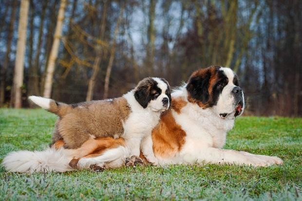 BARF für laktierende Hunde