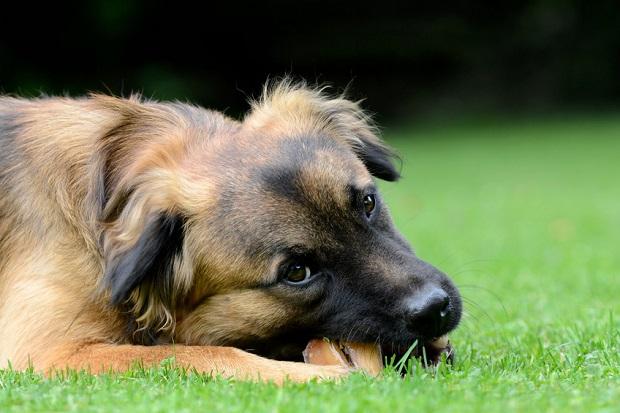 Natürliche Kauartikel für den Hund